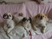 犬の美容室ゆうちゃんのスタッフのブログ