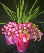 お気に入りの花たち(raku)
