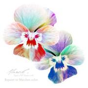 MARCLE[マークル] -花とレジンとフェイクスイーツ-