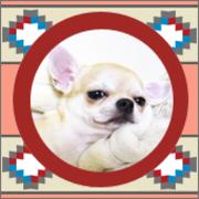 チワワ専門アニシモフ犬舎さんのプロフィール