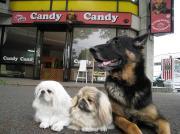 ドッグカフェ&ホテルCandyCandyのブログ