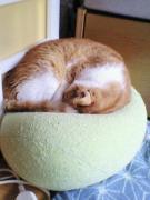 おひとりさまと猫いっぴき+もういっぴき