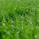 芝生の生活とガーデニングを楽しむサラリーマン