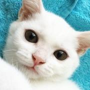 白猫「よね」の いちご大福通信
