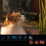 ノラ猫ポチと自由猫