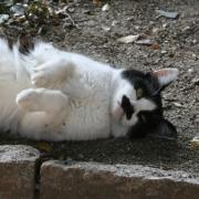 大阪 Cat Story