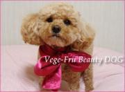 わんこの笑顔がわたしの笑顔 Vege-Fru Beauty