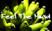 温泉蒸気を利用してのバナナ栽培!バナナはインテリア
