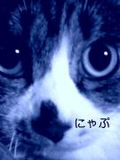 盲目の猫にゃぷとパパさん