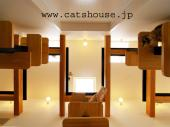 猫の家 The Cats' HouseのBLOG