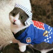 猫カフェ 猫家さんのプロフィール