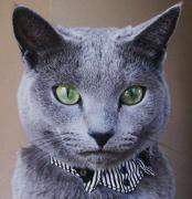 猫と住む 癒しのニャンズ