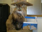 オール電化生活カノンとキアと猫ちゃんと愉快な仲間