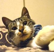 東京で里親募集中の猫