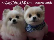 リンレオ日記〜ふたごのチビポメ!〜