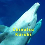 野生のイルカと泳ぐ 〜 GoProでドルフィンスイム 〜