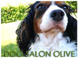 DOG SALON OLIVE-ドッグサロンオリーブ-倉敷市玉島