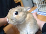 ウサギを相棒にいろんな情報の発信基地