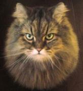 愛猫チャチャの魔法のヒゲ