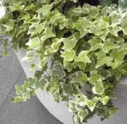花、植物、花屋の日記〜office green