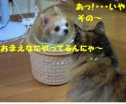cat tail & dog tail の保護日誌