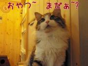 猫の「そら」とナチュラル生活