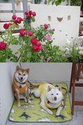 yumemi Garden a diary