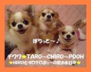 チワワ☆TARO〜CHIRO〜POOH
