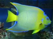 海水魚飼育アクアリューム館