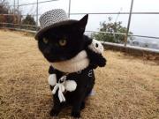黒猫クゥーちゃんのオレッチ日記