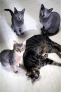 すみれ色の猫たち
