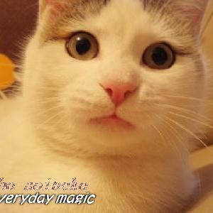 エブリディ・マジック−日だまりに猫と戯れ