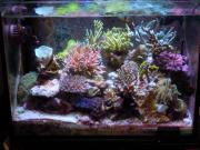 海水水槽メモ