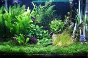 熱帯魚と水草のアクアリウム