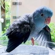 青い鳥ことり 今日のあしあと