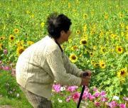 84歳☆大谷のはっちゃの日記