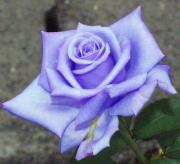BlueGarden BlogType