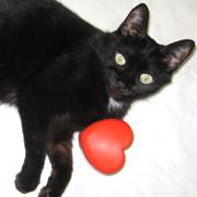 ねこもの日記*猫のおもちゃ箱