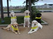 盲導犬達の活動・生活ブログ