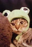 猫マメつれづれ日記