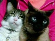 肉球大好き☆猫番長のブログ