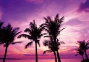 沖縄コンドミニアムの暮らし