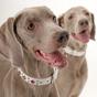 バカッコいい犬 -COOL DOG TRICKS-