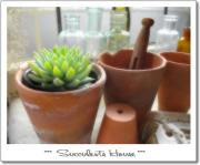 *** Succulents House ***