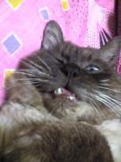 牙を磨け!!