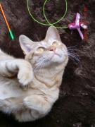 ネコネコ子猫のブログ