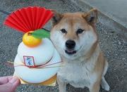 笑子のフォト俳句ブログ