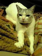 Cat-Tail手作り帳