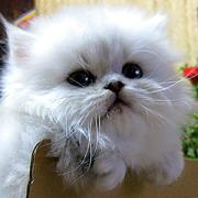 妹の猫を勝手に紹介しますブログ