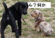 黒獣☆chloe☆訓練日記